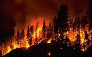1-incendio-forestal-1-elizalde