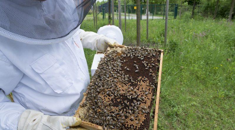 Productores apícolas organizados  fortalecen capacidades en el Cusco