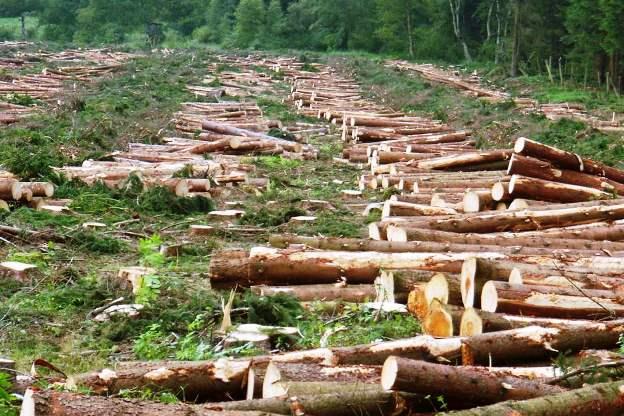 Denuncian tala de árboles en Complejo Arqueológico de Choquequirao