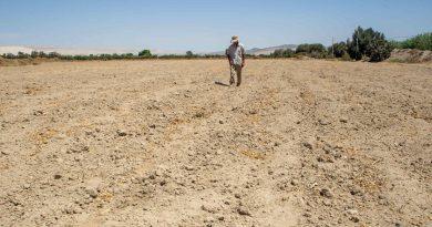 Empresa agro exportadora deja sin agua la producción del pallar, en Ocucaje