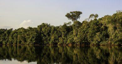 Loreto: El Estado busca potenciar oferta turística en la Reserva Nacional Allpahuayo Mishana