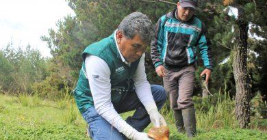Lambayeque: Senasa autoriza funcionamiento de procesadoras de hongos comestibles