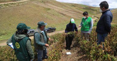 Junín: 8 hectáreas de cultivos perdidos y 42 hectáreas afectadas por helada en Chucos – Pucará