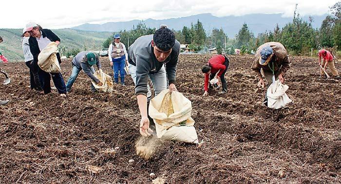 Apurímac: Midagri entrega 2 mil toneladas de guano de las islas para agricultores