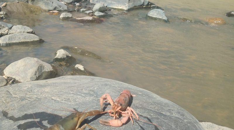 Moquegua: Pescadores de camarón de Omate se retiran de mesa de dialogo por contaminación de Rio Tambo.