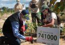 Madre de Dios: Gobierno culmina reforestación al 100 % en zonas afectadas por minería ilegal en la Reserva Nacional Tambopata