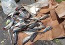 Madre de Dios: Comerciantes botan a la vía verduras y pescado malogrados debido al bloqueo de la carretera